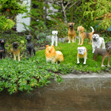 Miniature Dogs - Trained & Staked