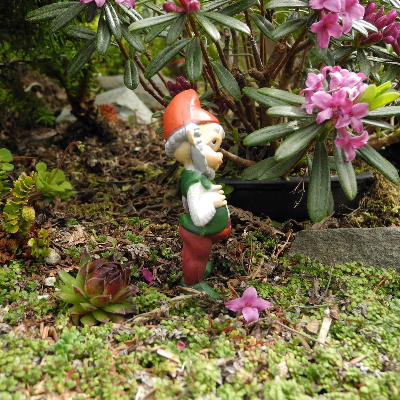 Miniature Garden Gnome - The All Knowing Gnome – Two Green Thumbs ...
