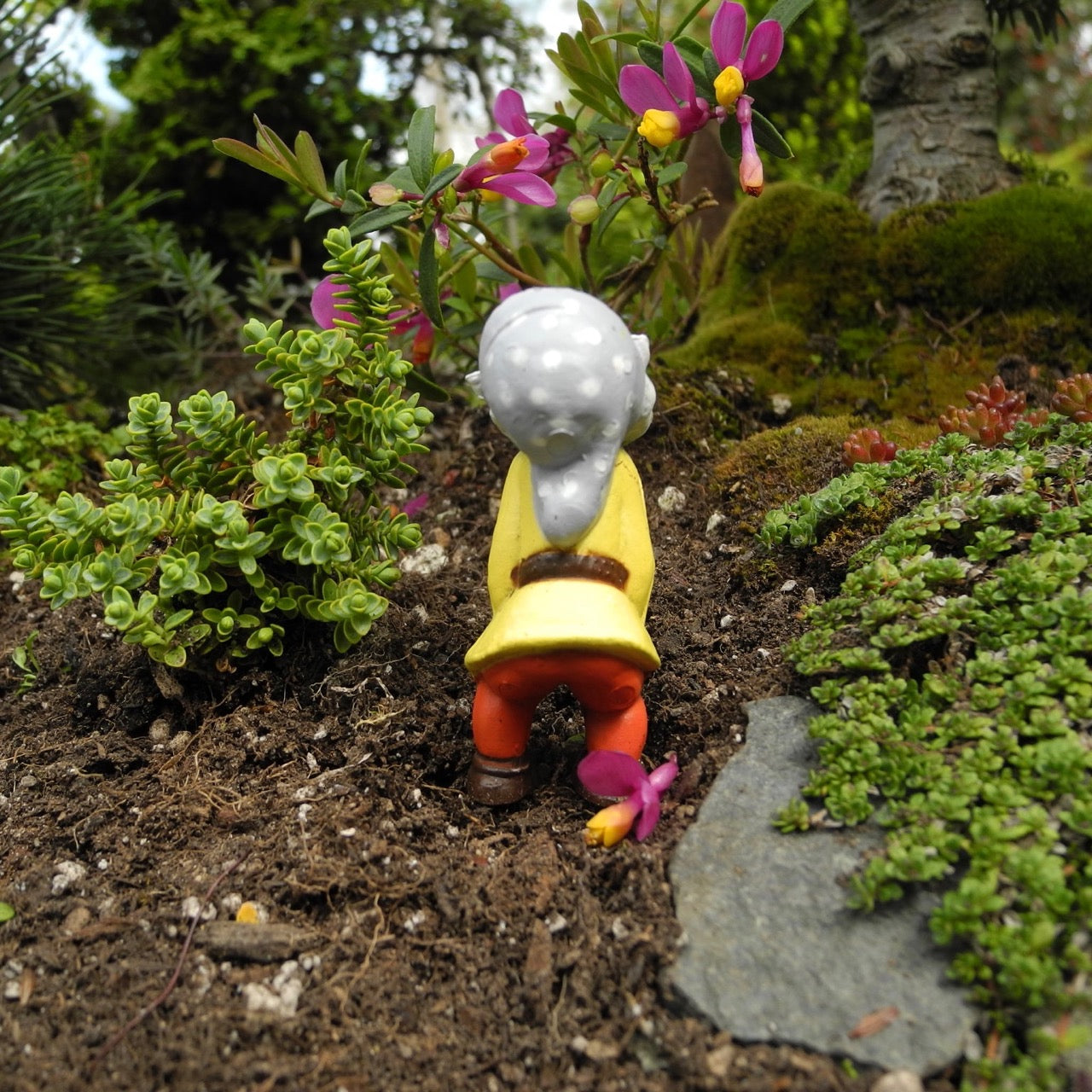 Miniature Garden Gnome - The Helper Gnome – Two Green Thumbs ...