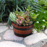 Mini Barrel Planter