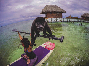 PANAMA: Monkeying Around