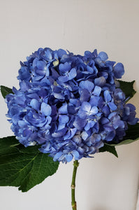 Premium Hydrangea Shocking Blue