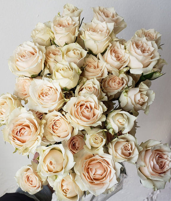 Spray Rose White Majolica