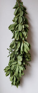 Pittosporum Variegated Garland ($7.50 per foot)