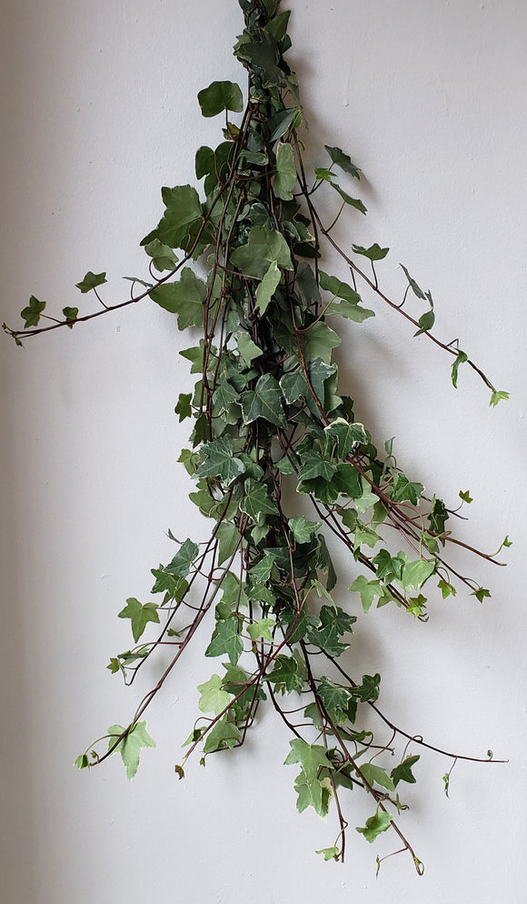 Ivy Variegated Garland ($8.50 per foot)