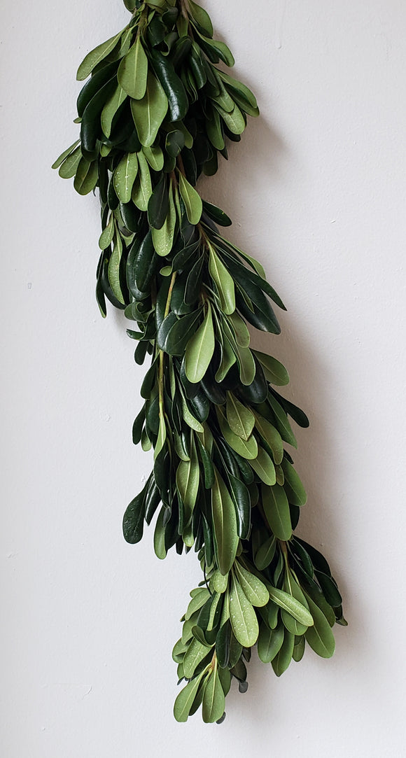 Pittosporum Green Garland ($8.60 per foot)