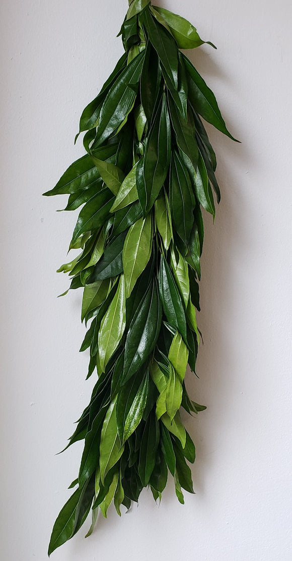 Cocculus Garland ($6.00 PER FOOT)