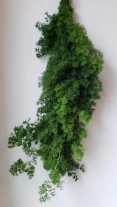 Ming Fern Garland ($5.50 per foot)