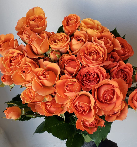 Spray Rose Orange Babe