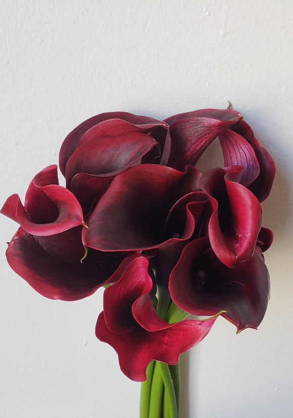 Calla Mini Burgundy