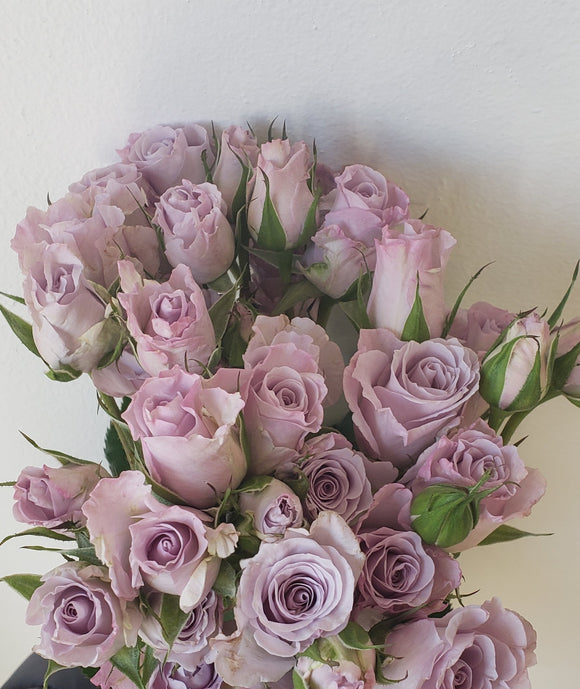 Spray Rose Lavender