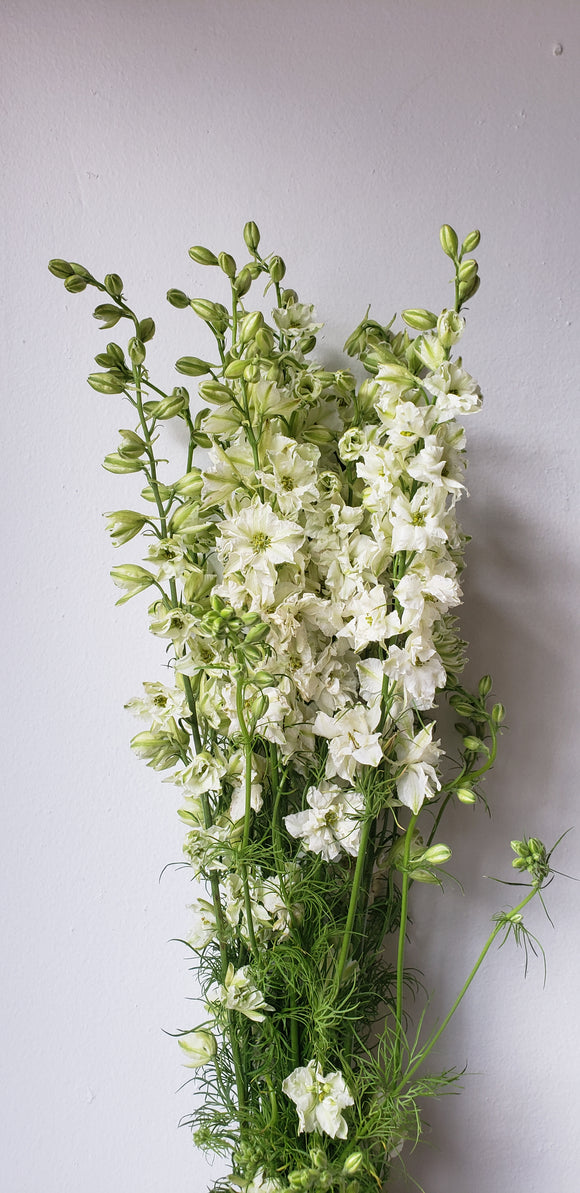Larkspur White