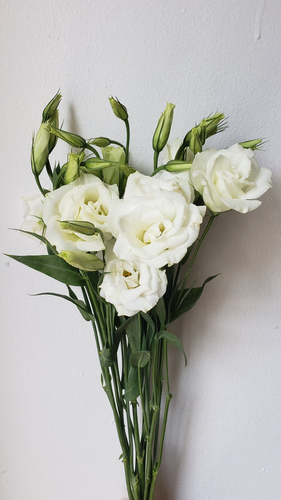 Lisianthus Small White