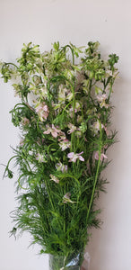 Larkspur Light Pink