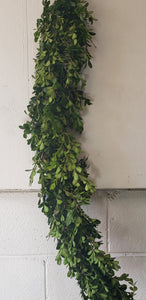 Garland Carolina Boxwood (price per foot)