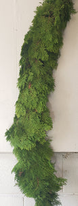 Garland Arborvitae (per foot price)