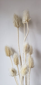 Bleached Thistle