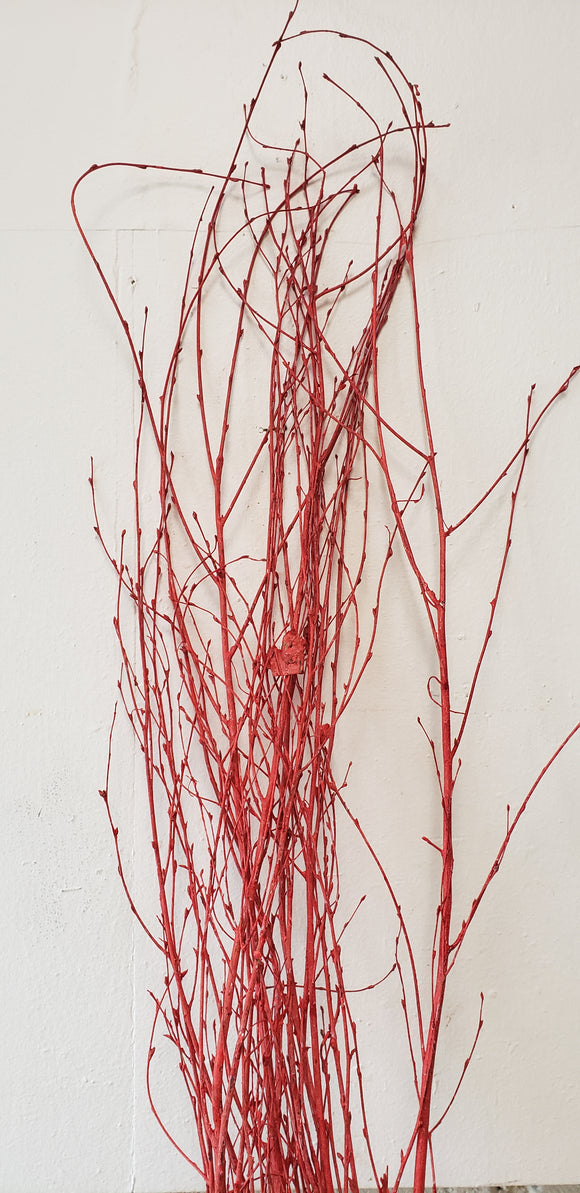 Birch Branches Sprayed Red