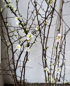 Quince Branches Pink