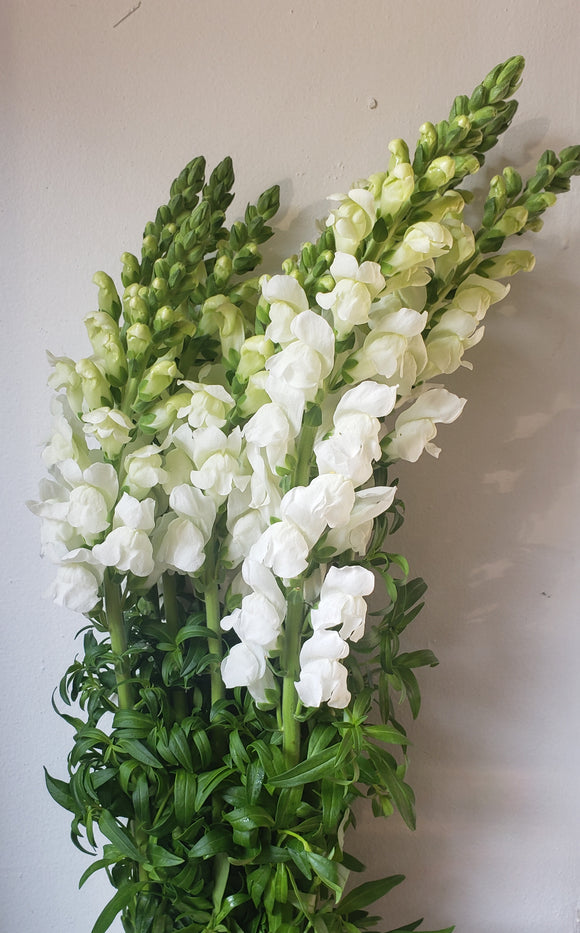 Snapdragon White