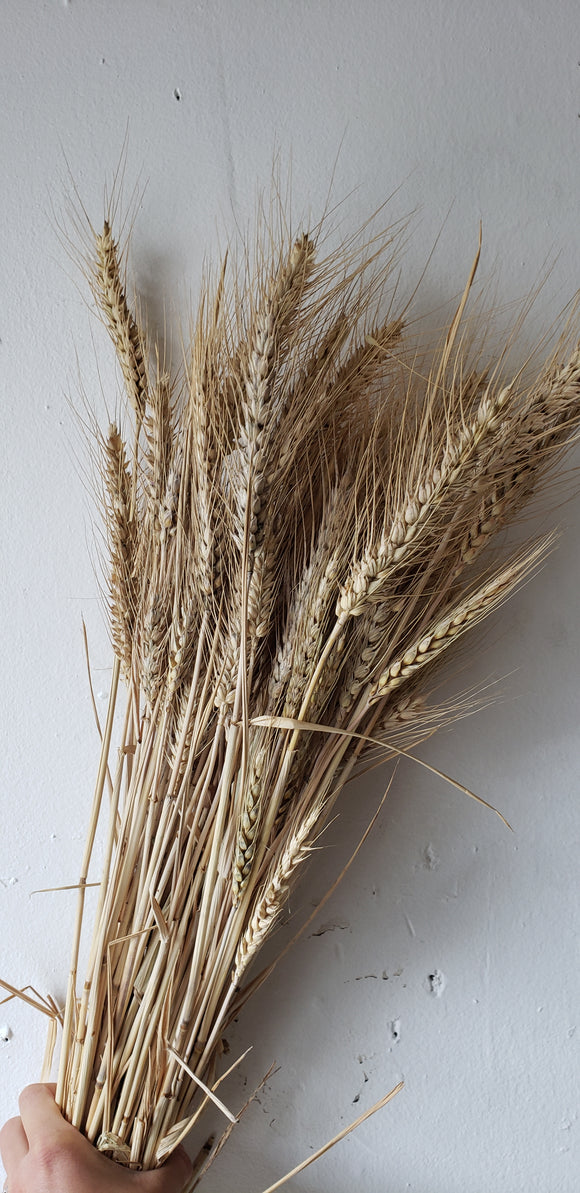 Wheat Dried
