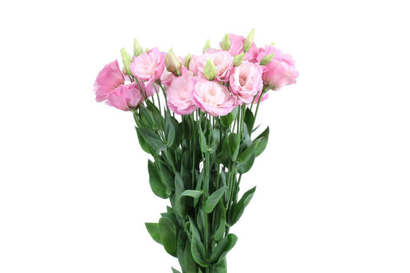 Lisianthus Small Pink