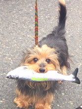 Portland Puppy Gear Chinook Salmon Toy