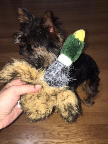 Duck Toy