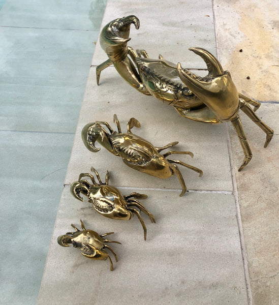 Polished Brass Mud Crab XS
