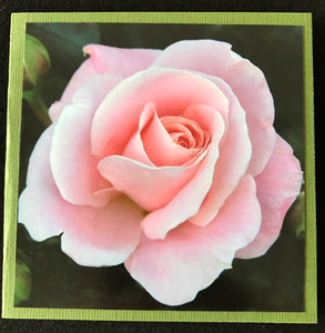 GREETING CARD   Rose Pink 1   SPECIAL PRICE