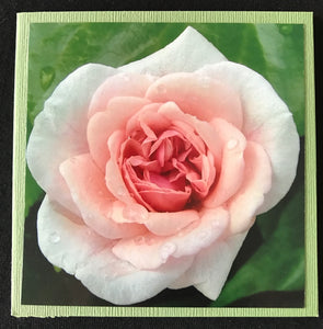 GREETING CARD   Rose Pink 2   SPECIAL PRICE