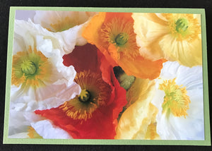 GREETING CARD   Poppies 1   SPECIAL PRICE