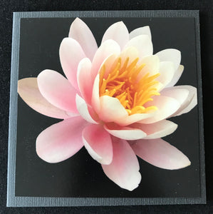 GREETING CARD   Waterlily   SPECIAL PRICE