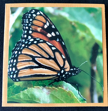 GREETING CARD   Butterfly   SPECIAL PRICE