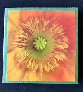 GREETING CARD   Poppy Yellow 1   SPECIAL PRICE