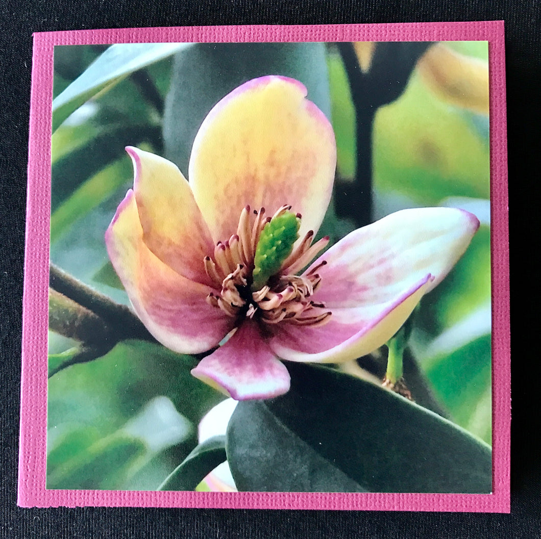 GREETING CARD   Magnolia   SPECIAL PRICE