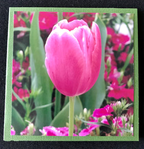 GREETING CARD   Tulip Pink   SPECIAL PRICE