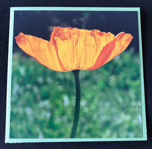 GREETING CARD   Poppy Yellow 2   SPECIAL PRICE