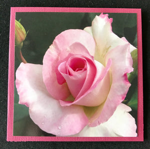 GREETING CARD   Rose Pink 3   SPECIAL PRICE