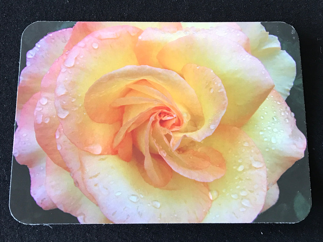 MAGNET   Rose   ONLY ONE AVAILABLE