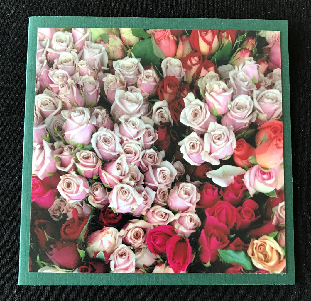 GREETING CARD   Roses Galore   SPECIAL PRICE   ONE ONLY