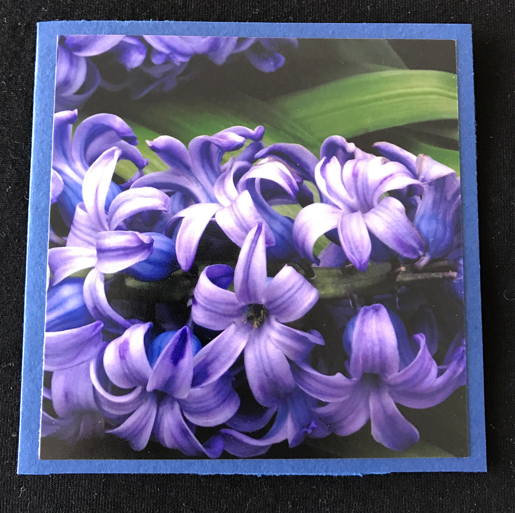 GREETING CARD   Hyacinth   SPECIAL PRICE