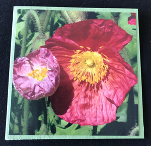 GREETING CARD   Poppies 2   SPECIAL PRICE