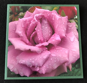 GREETING CARD   Rose Purple with Raindrops   SPECIAL PRICE