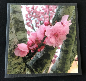 GREETING CARD   Blossom 2   SPECIAL PRICE