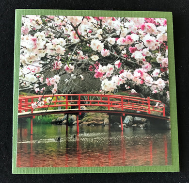 GREETING CARD   Blossom 3   SPECIAL PRICE