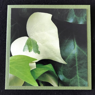 GREETING CARD   Heart Leaf   SPECIAL PRICE