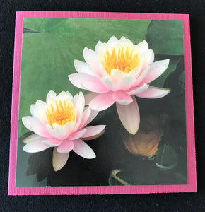 GREETING CARD   Waterlily 2   SPECIAL PRICE