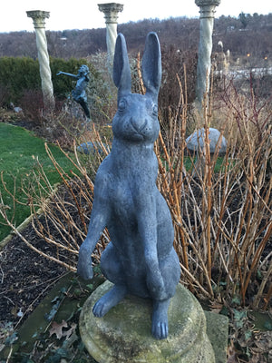 Hare Standing