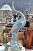 Heron Looking Up Fountain